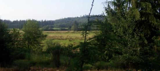 Forest area along the North Oregon Coast